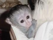 Very Cute Baby Spider Monkey